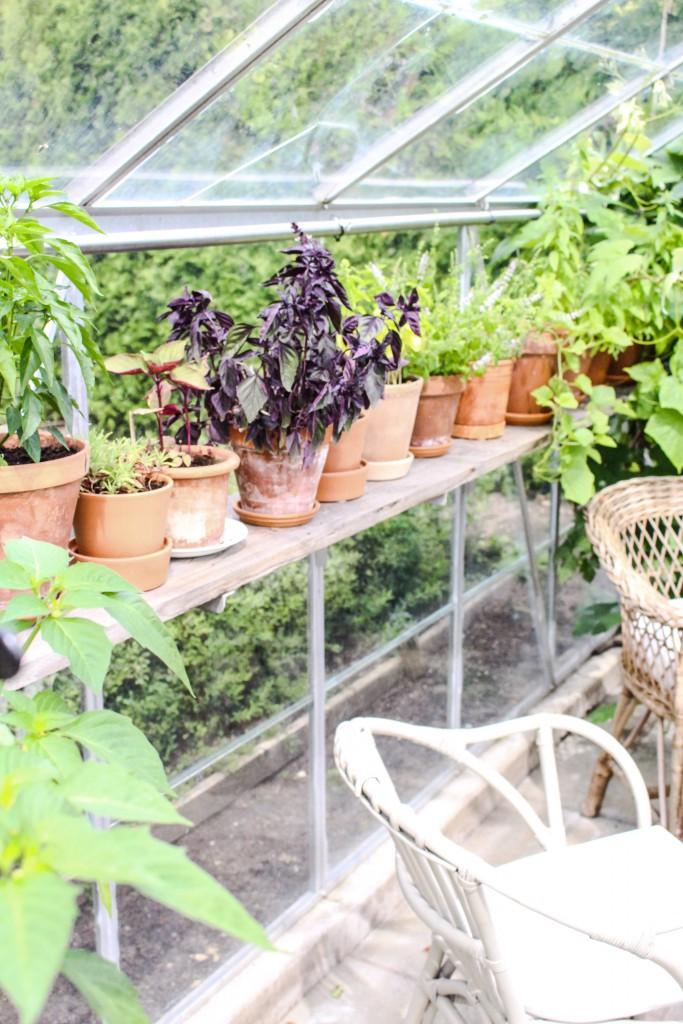 Vildvuxet växthus
